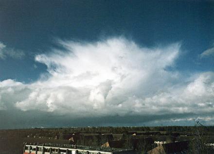 wolkenatlasnl-cb-capillatus