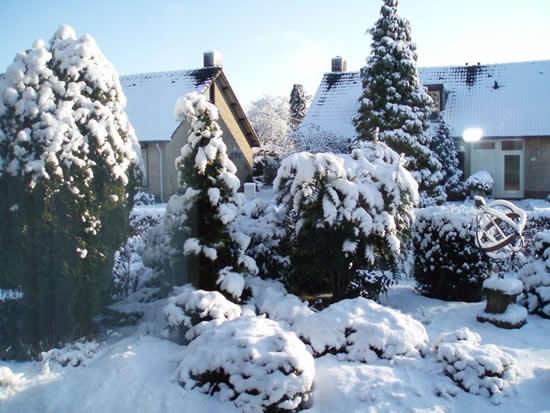 Joop Verstraten uit Siebengewald maakt deze prachtige foto van een onder een dik pak sneeuw bedekt tuinlandschap (foto 5 januari 2009).