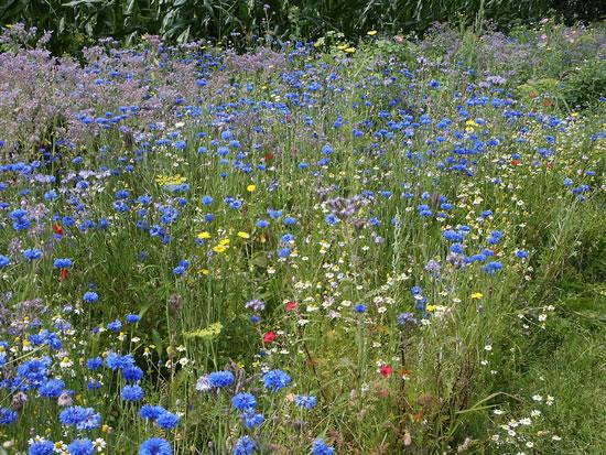 Deze foto, eveneens gemaakt door Ingrid van der Cruijsen uit Mill, toont de diversiteit aan bloemen in dit kleurrijke zomerse bloembed - augustus 2007.