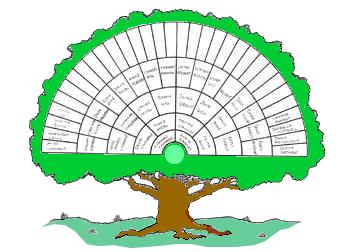 stamboom-3-kleur