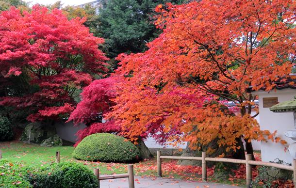 Een herfstfoto, gemaakt in de Japanse tuin in de Zoo van Amersfoort (foto 24 oktober 2015 door Ria Mensink uit Deventer).