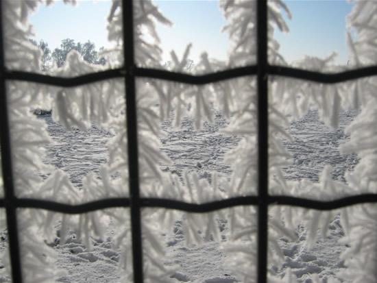 In de 2e week van januari 2009 ging zuid en oost Nederland gebukt onder zeer strenge vorst. De familie Hendrix uit Gassel maaktte deze prachtige foto van het sneeuwlandschap, gezien door een hekwerk waarop zich zware rijp heeft gevormd.